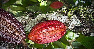 Qu'Est-Ce Que Le Cacao (La Fève De Cacao)?