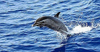 ¿Cuál Es La Diferencia Entre Un Delfín Y Una Marsopa?