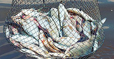 Hva Er Miljøvirkningen Av Fiskeindustrien?
