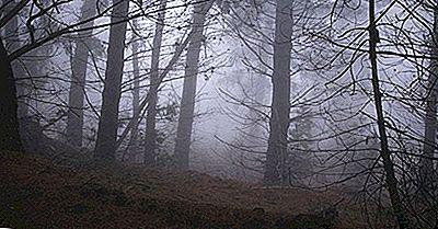 Cos'È L'Umidità E Come Influisce La Vita Sulla Terra?