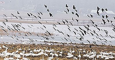 Qual É O Ato Do Tratado Sobre Aves Migratórias?