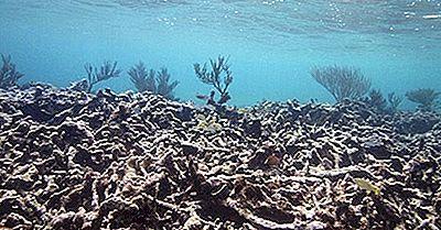 Cos'È L'Acidificazione Oceanica?