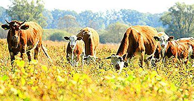 Ce Este Agricultura Durabilă?
