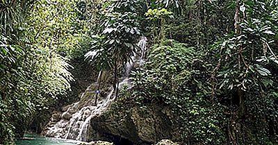 Qu'Est-Ce Qu'Un Climat De Forêt Tropicale Humide?