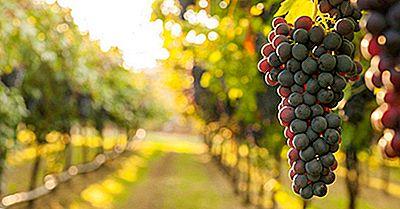 Wat Is Wijnbouw? | 2020