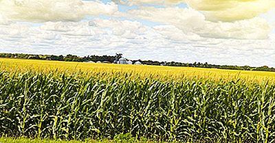 Quale Regione Degli Stati Uniti È Prevalente Nella Produzione Di Mais?