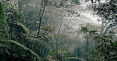 Quali Tipi Di Foreste Pluviali Ci Sono?