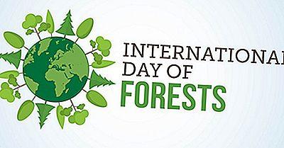 Quando E Perché È Celebrata La Giornata Internazionale Delle Foreste?