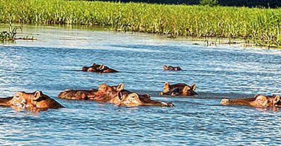 ¿Dónde Viven Los Hipopótamos?
