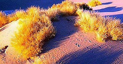 Onde O Grande Deserto Da Bacia Se Encontra?