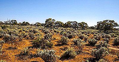 ¿Dónde Se Encuentra El Gran Desierto De Victoria?