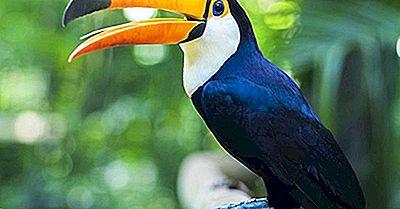 În Cazul În Care Este Rainforest Amazon?