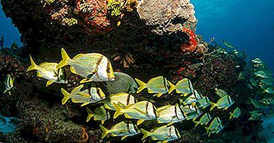 Dove Si Trova Il Sistema Mesoamerican Barrier Reef?
