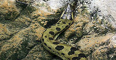 Quels Sont Les Plus Grands Serpents Du Monde?