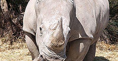 Fatos De Rinoceronte Branco: Animais Da África