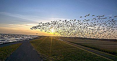 Pourquoi Les Oiseaux Migrent-Ils?