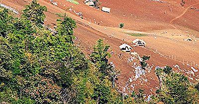 ¿Por Qué La Deforestación Es Un Problema Tan Grave?