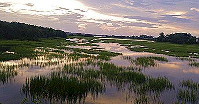 Cele Mai Amenințate Amfibieni Din Lume