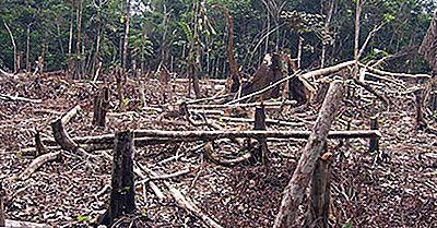I Peggiori Paesi Per La Deforestazione Da Parte Delle Perdite Nelle Aree Boschive