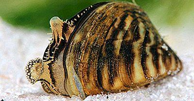 La Peor Especie Invasora De Crustáceos Y Moluscos