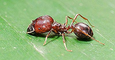 La Peor Especie De Insecto Invasor