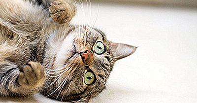 10 Fantastiske Fakta Om Katte