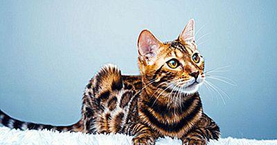 15 Razas De Gatos Raros De Todo El Mundo
