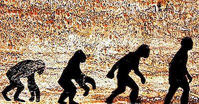 Specie Umane Antiche E Moderne