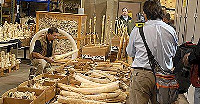 Asiatische Länder Mit Den Meisten Elfenbeinangriffen