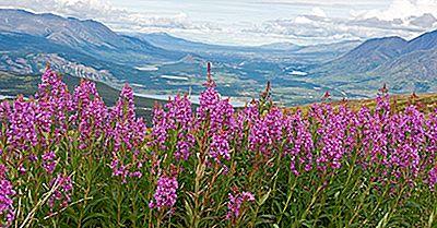 Fleurs Des Provinces Et Territoires Canadiens