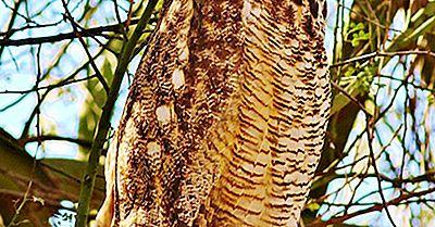 Virginia-Uhu-Fakten: Tiere Von Nordamerika