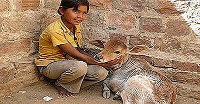 Pröva Kärlek För Alla Levande Varelser: Indiens Bishnois