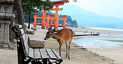 Les Trois Points De Vue Du Japon: Vieux Et Nouveau