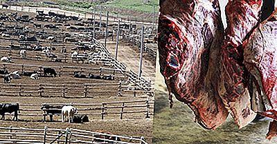 USA Som Slaktar De Flesta Djur För Kött