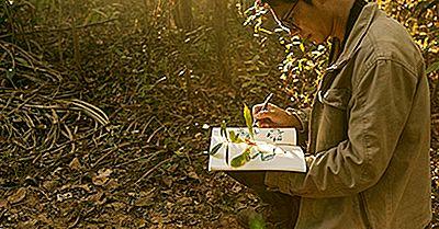 Was Ist Ein Botaniker?