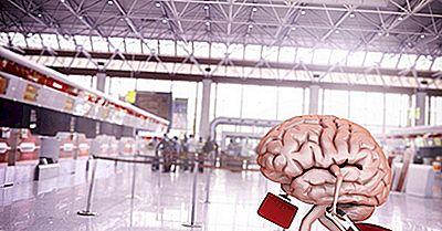 Che Cos'È Il Brain Drain?