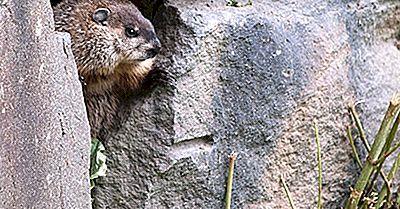 Vad Är Groundhog Day?
