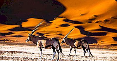 10 Cose Che Non Sapevi Sulla Namibia