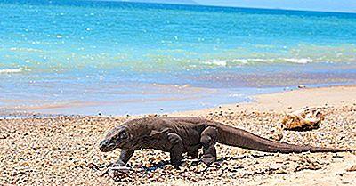 Los Mejores Lugares Del Mundo Para Ver Dragones De Komodo En Su Entorno Natural