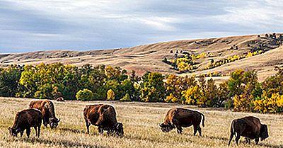 Custer State Park, South Dakota - Einzigartige Orte Auf Der Ganzen Welt