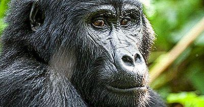 Zone De Patrimoniu Mondial Amenințate În Republica Democrată Congo