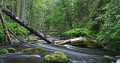 Os Cinco Melhores Parques Nacionais Da Estônia