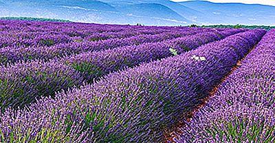 Lavender Fields Of Provence - Lugares Únicos En El Mundo