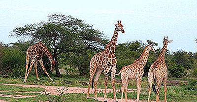 De Mest Besøkte Landene I Afrika