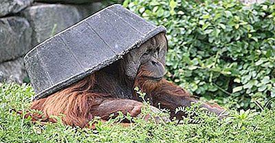 Die Ältesten Zoos In Den Vereinigten Staaten