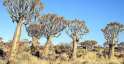 Foresta Dell'Albero Faretra - Luoghi Unici In Namibia