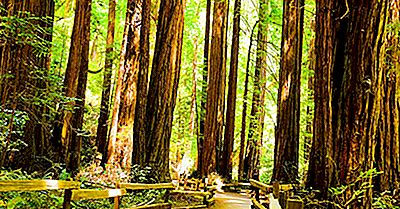 El Bosque De Redwood - Lugares Únicos En El Mundo