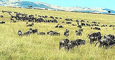 Serengeti National Park, Tanzania - Unika Platser Runt Om I Världen