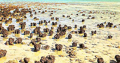 Shark Bay: Patrimônio Mundial Da Unesco Na Austrália
