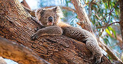 Cose Da Vedere A Kangaroo Island, In Australia, Oltre Ai Canguri